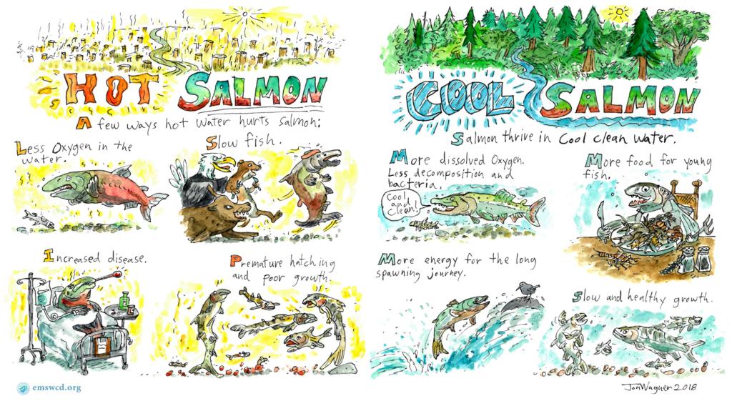 Hot versus cold salmon comic