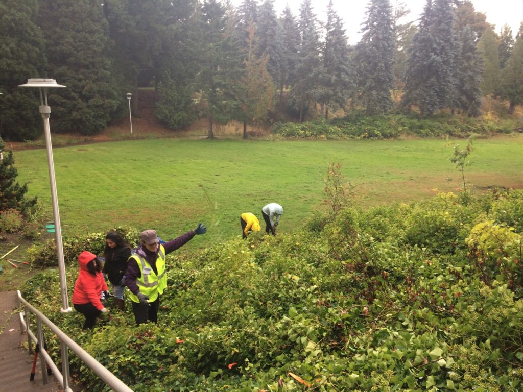 Removal of invasive English ivy began in October 2017