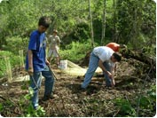 Volunteer boy scout troop helps to plant trees.