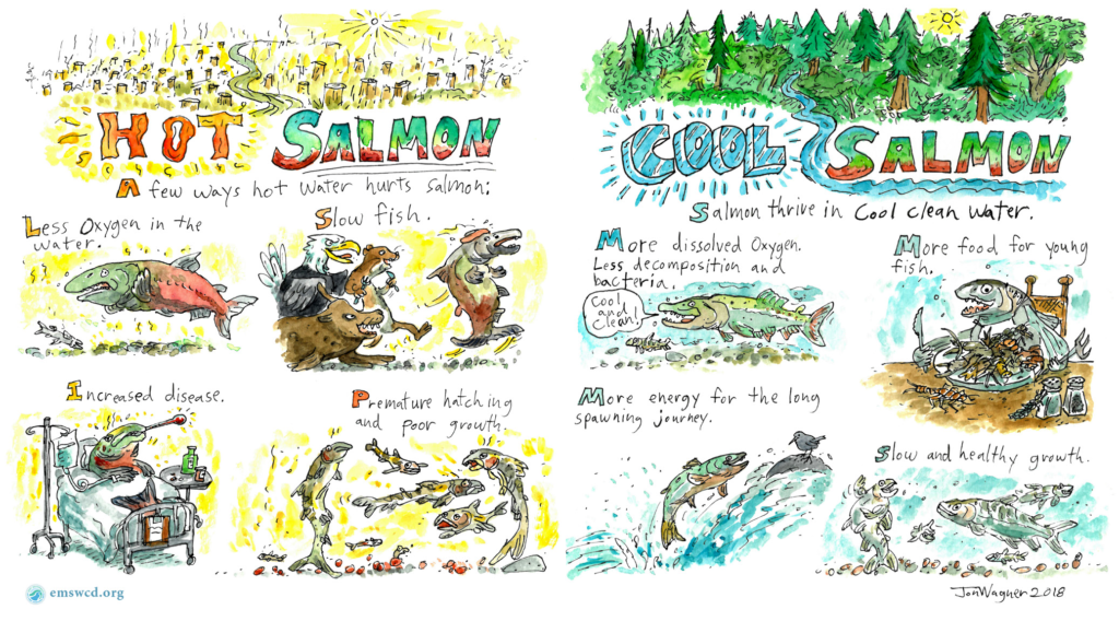 Hot versus cold salmon comic