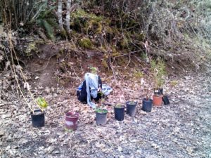 Native plants ready to go in the ground along Beaver Creek.