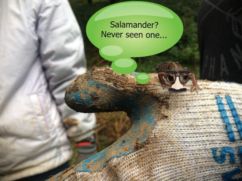 Salamander? Never seen one