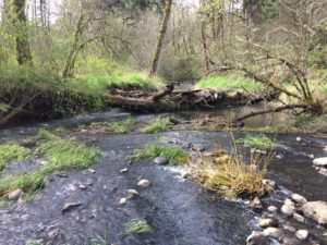 Confluence of Beaver and Kelly Creeks on MHCC Campus