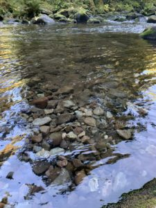 Lighter colored cobble in Still Creek show signs of redd building